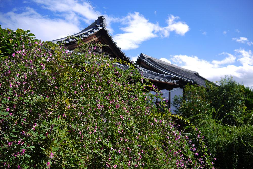 常林寺の萩の写真素材