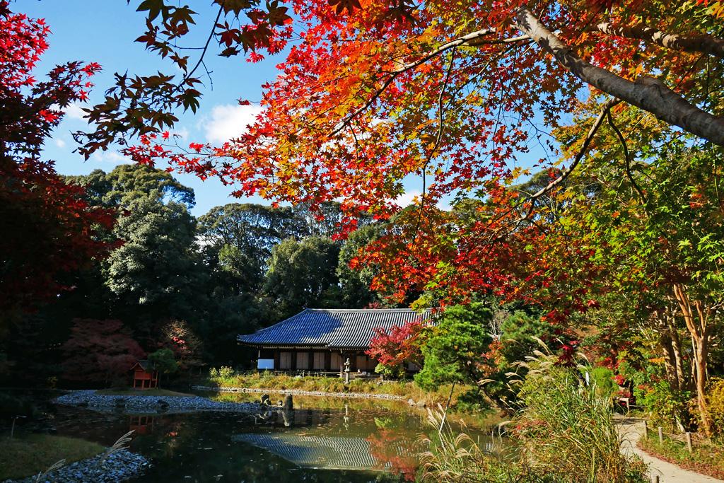 浄瑠璃寺の三重塔の写真素材