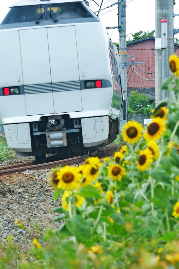 向日葵とJR山陰線特急きのさきの写真素材