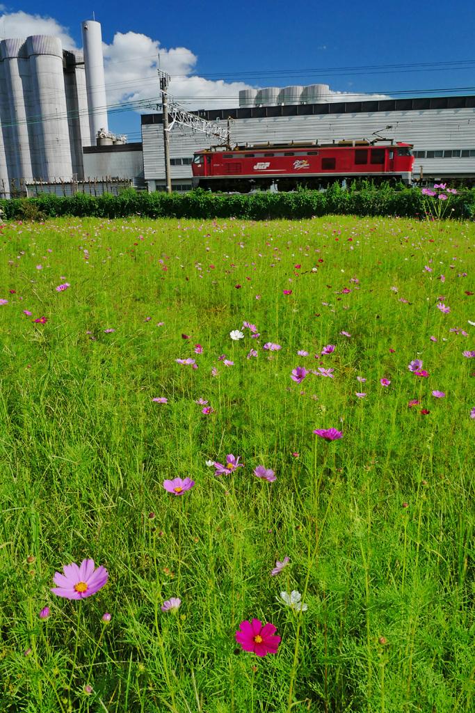 JR京都線 JR貨物列車レッドサンダー 長岡京市のサントリーの工場の写真素材