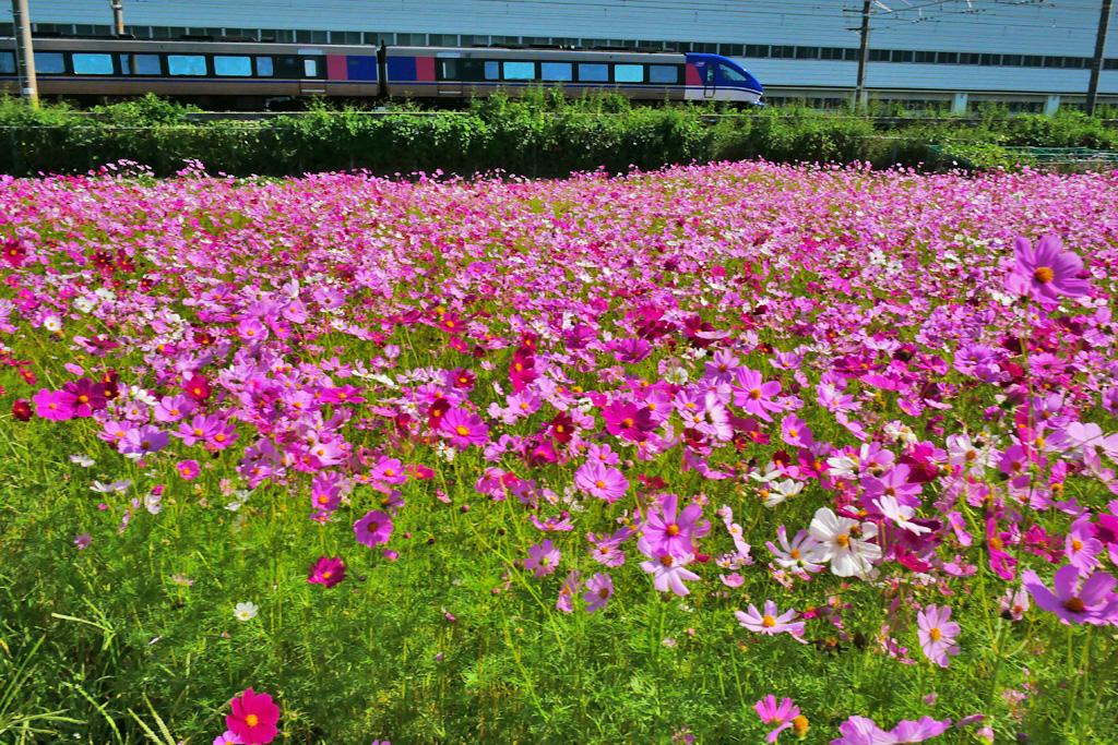 JR京都線 長岡京市のサントリーの工場 スーパーはくとの写真素材