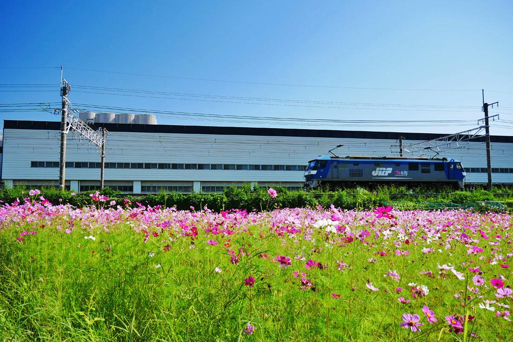 JR京都線 長岡京市のサントリーの工場 貨物列車 桃太郎の写真素材