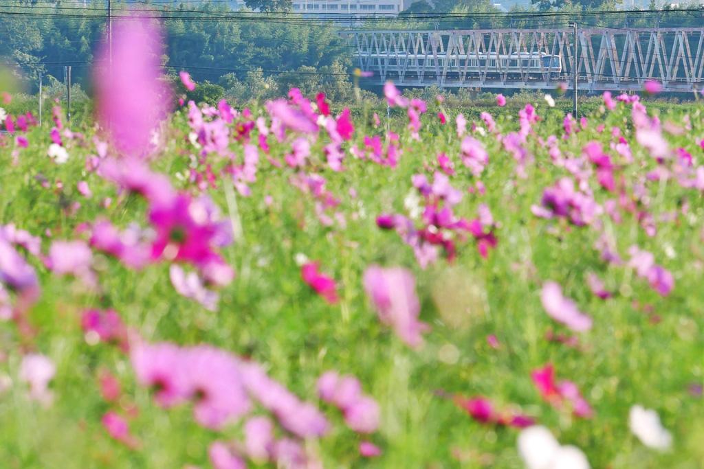 JR奈良線 木津川橋梁の写真素材