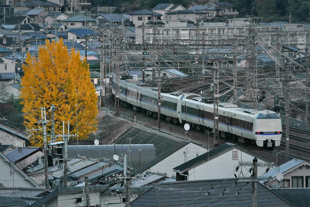 京都山科のサンダーバードとイチョウの写真素材