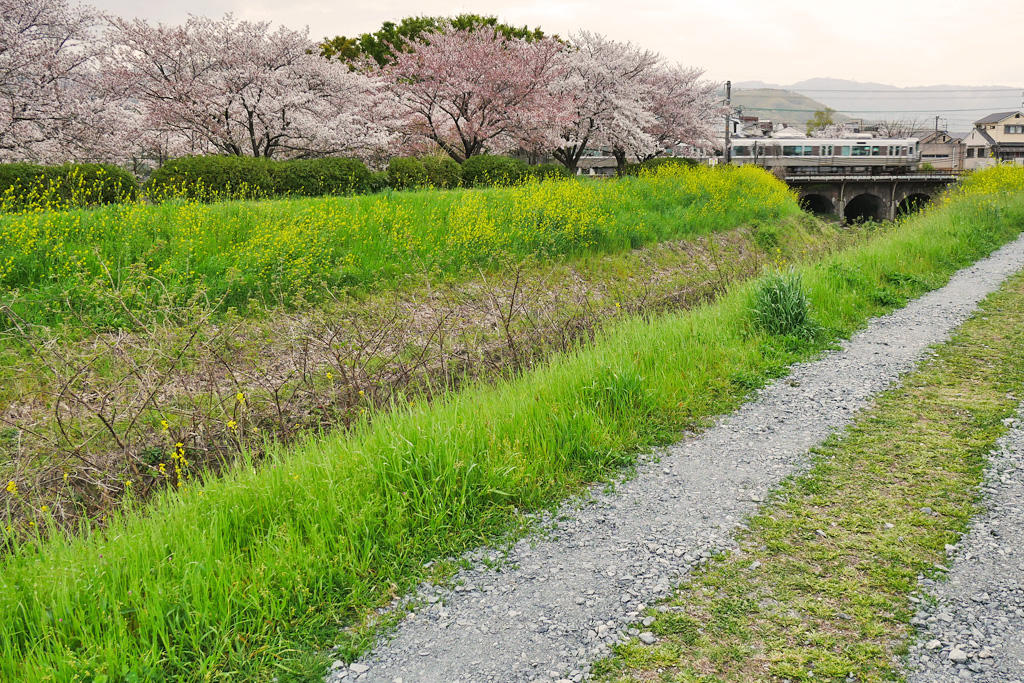 JR京都線 老ヶ辻橋梁の写真素材
