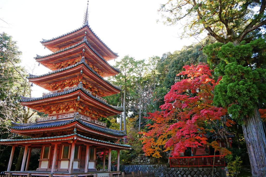 海住山寺の紅葉の写真素材