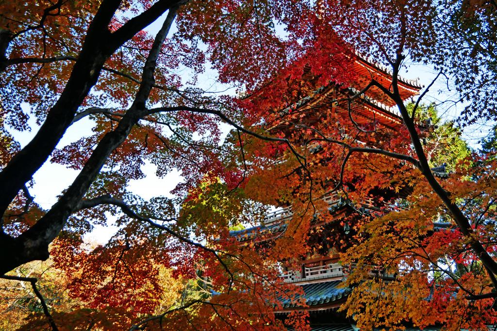 海住山寺の五重塔の写真素材