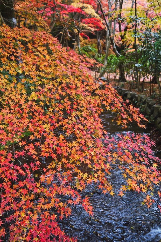 上賀茂神社の紅葉の写真素材