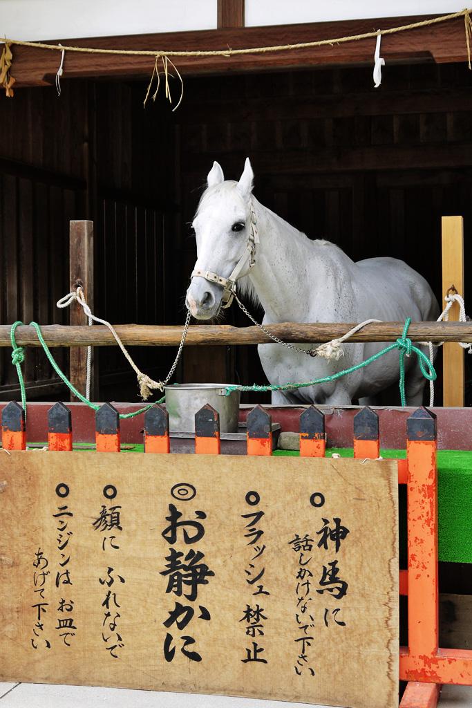 上賀茂神社の神馬の写真素材