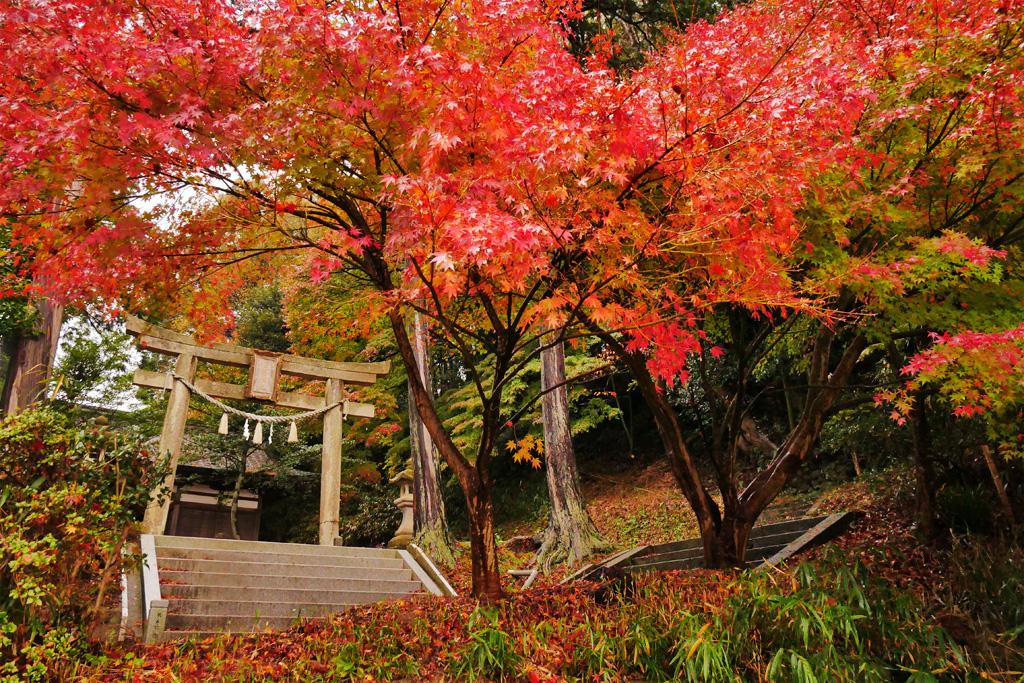 金峰神社の写真素材