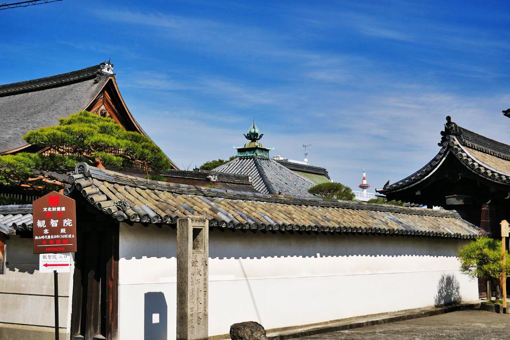 東寺 観智院の枝垂れ梅の写真素材
