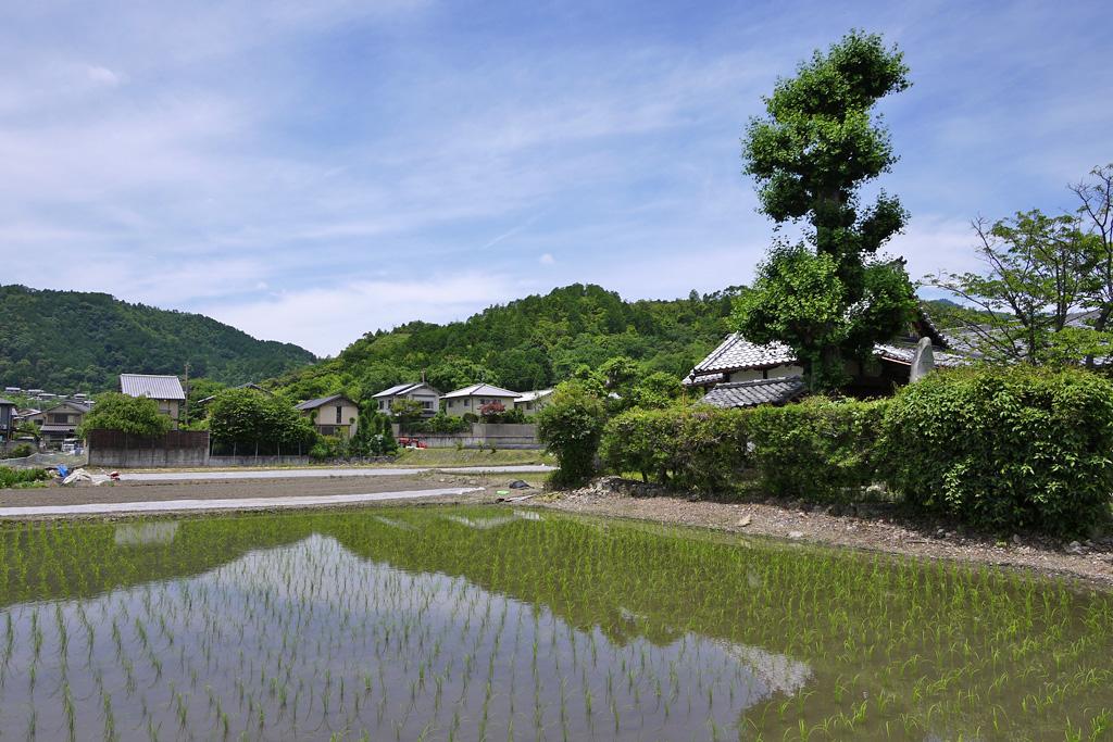 観空寺の写真素材