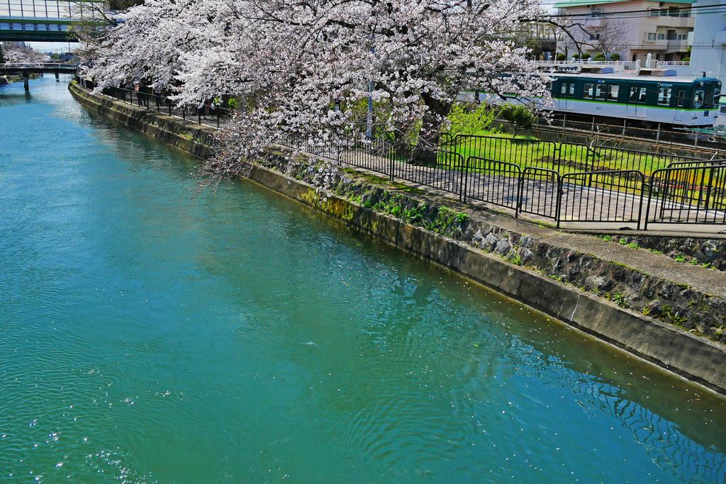 京阪電車と疏水と桜の写真素材