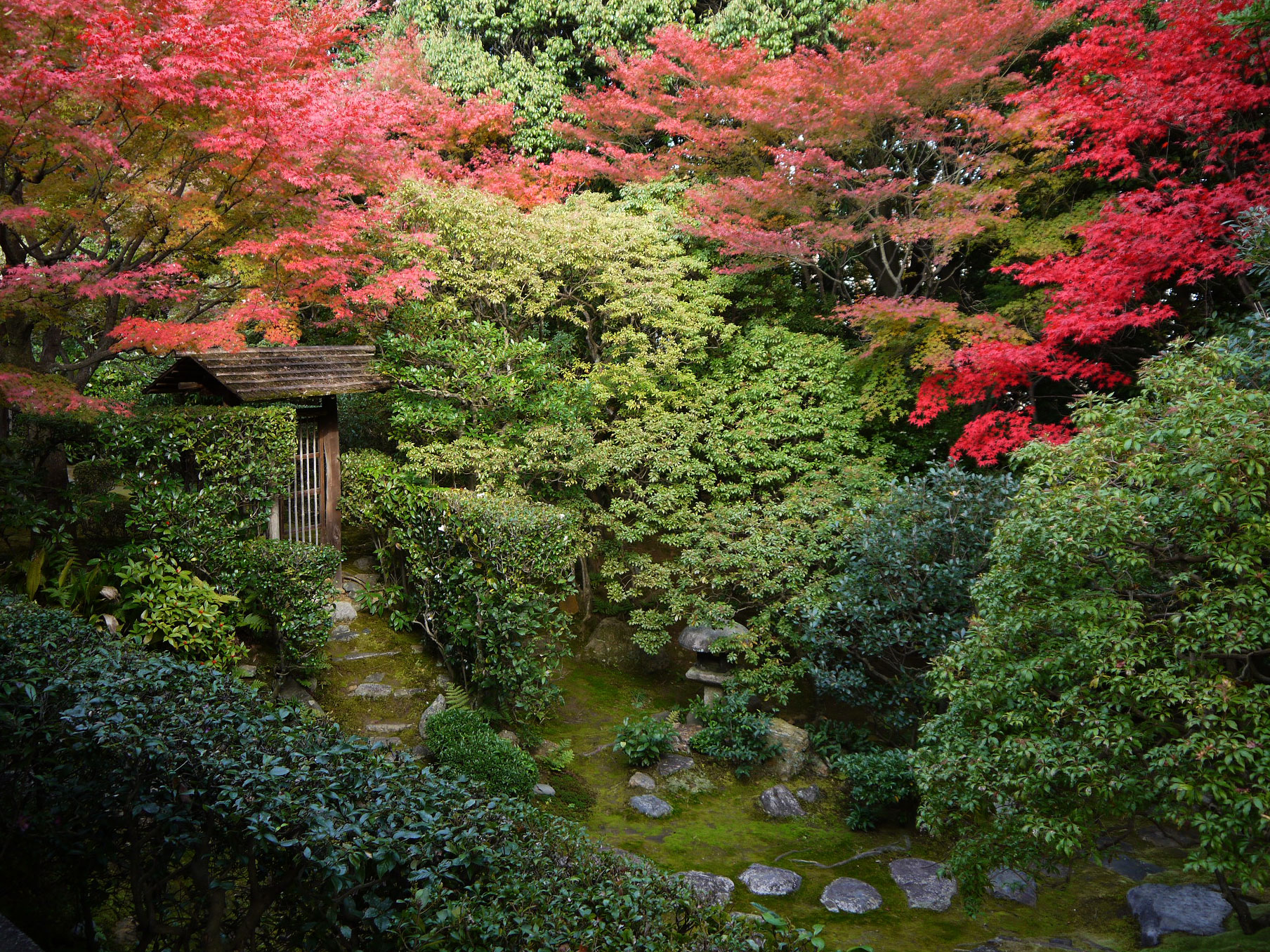 妙心寺桂春院の紅葉の写真素材