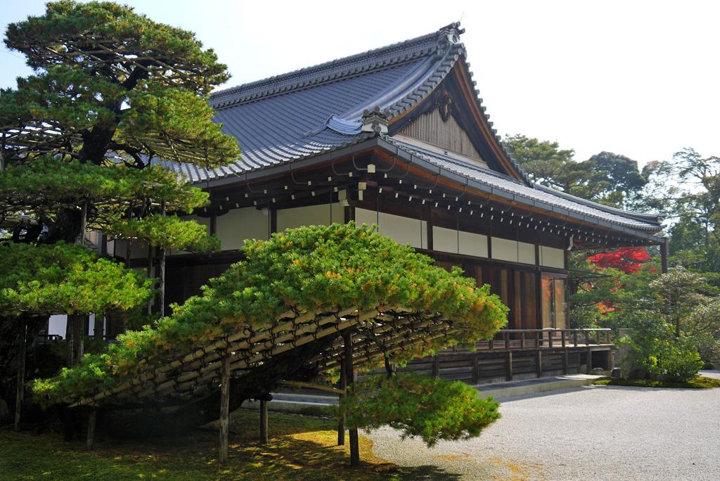 金閣寺の松の写真