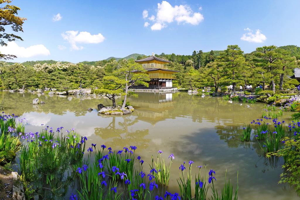 金閣寺の杜若の写真素材