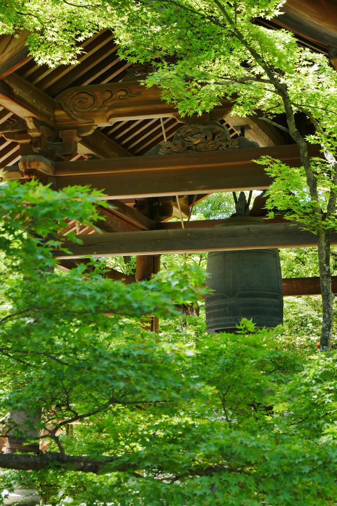 金閣寺の青もみじの写真素材