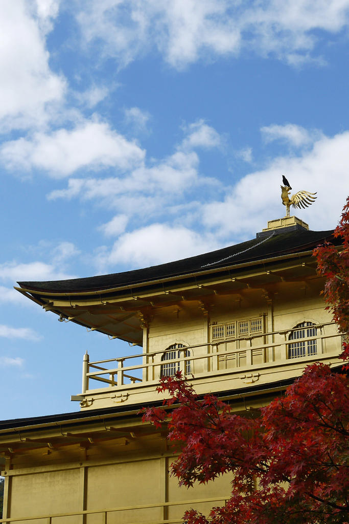 金閣寺とカラスの写真素材
