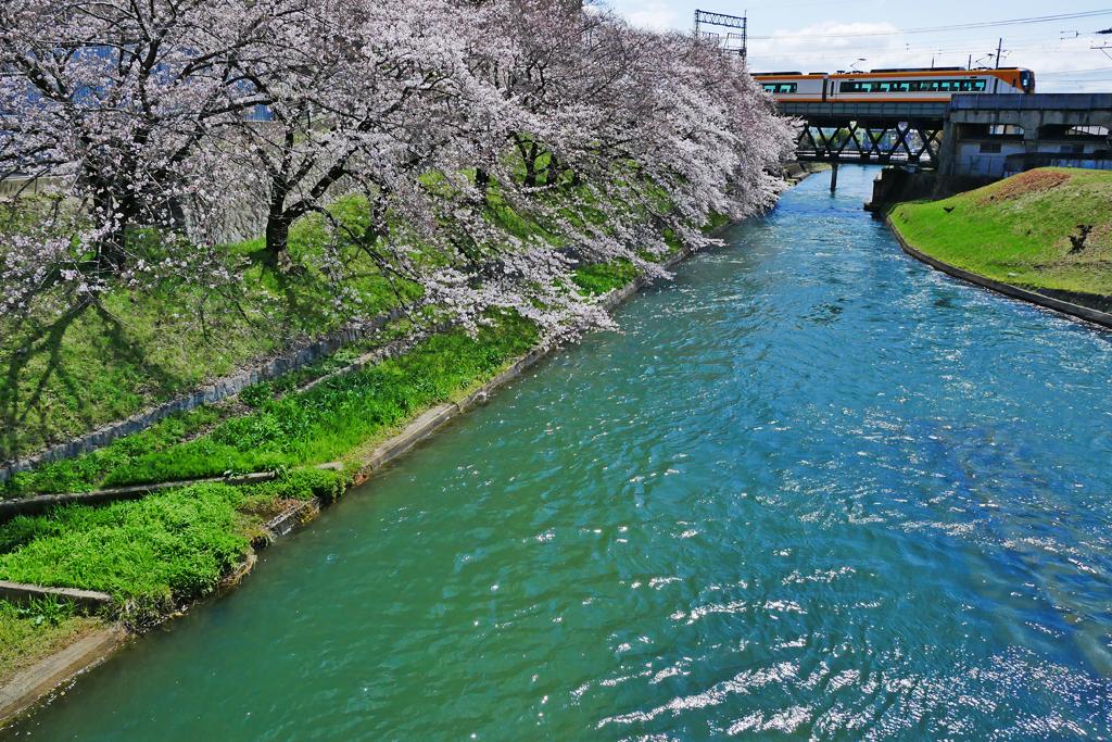 濠川と近鉄電車と桜の写真素材