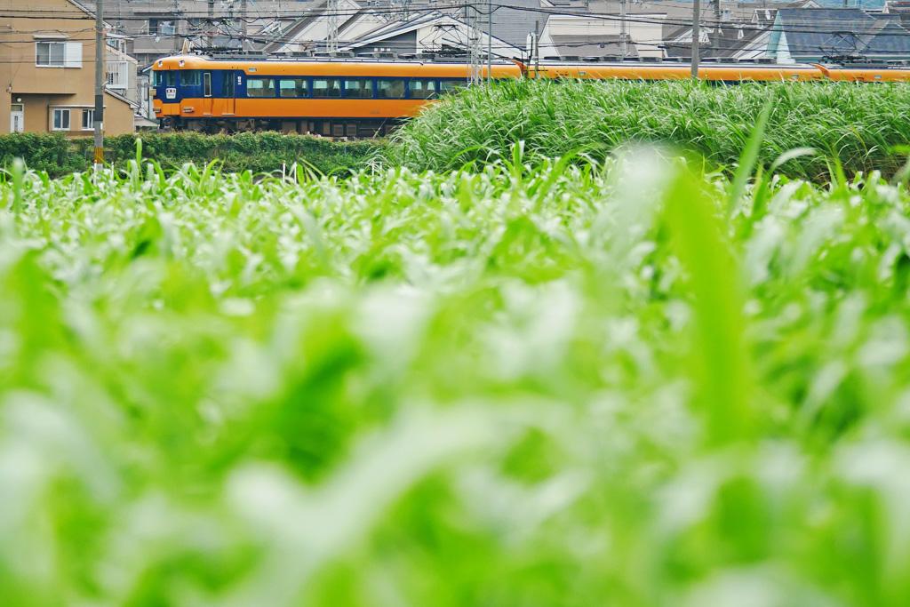 近鉄電車と田んぼの写真素材