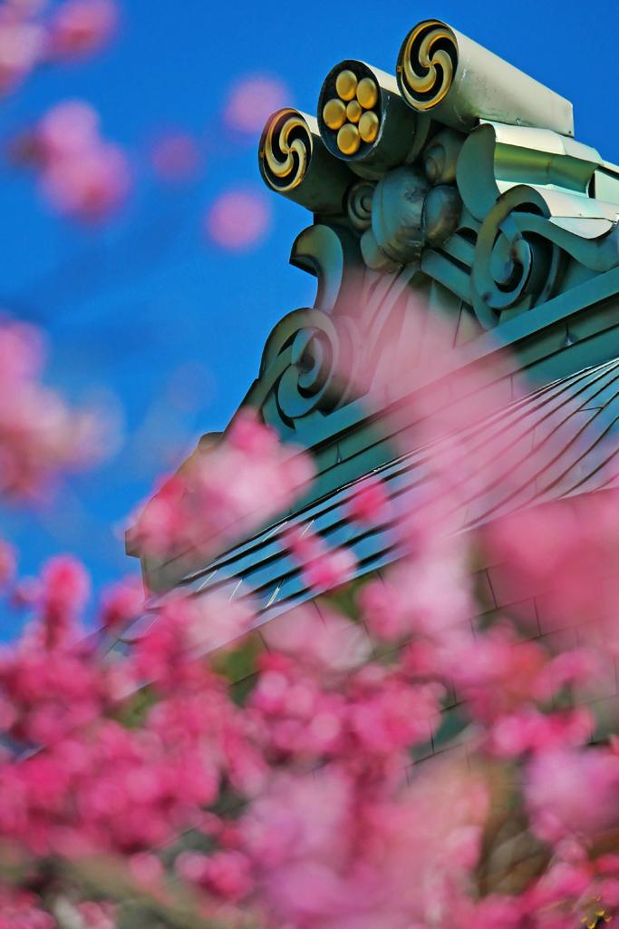 北野天満宮の梅の写真素材