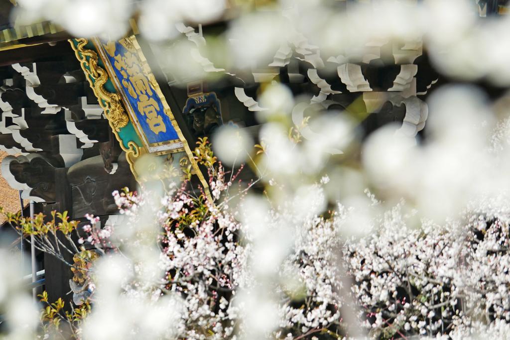 北野天満宮の雪の写真素材