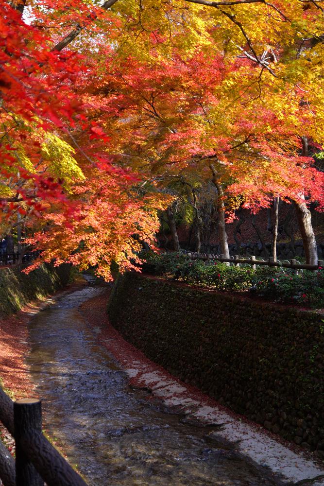 北野天満宮の紅葉