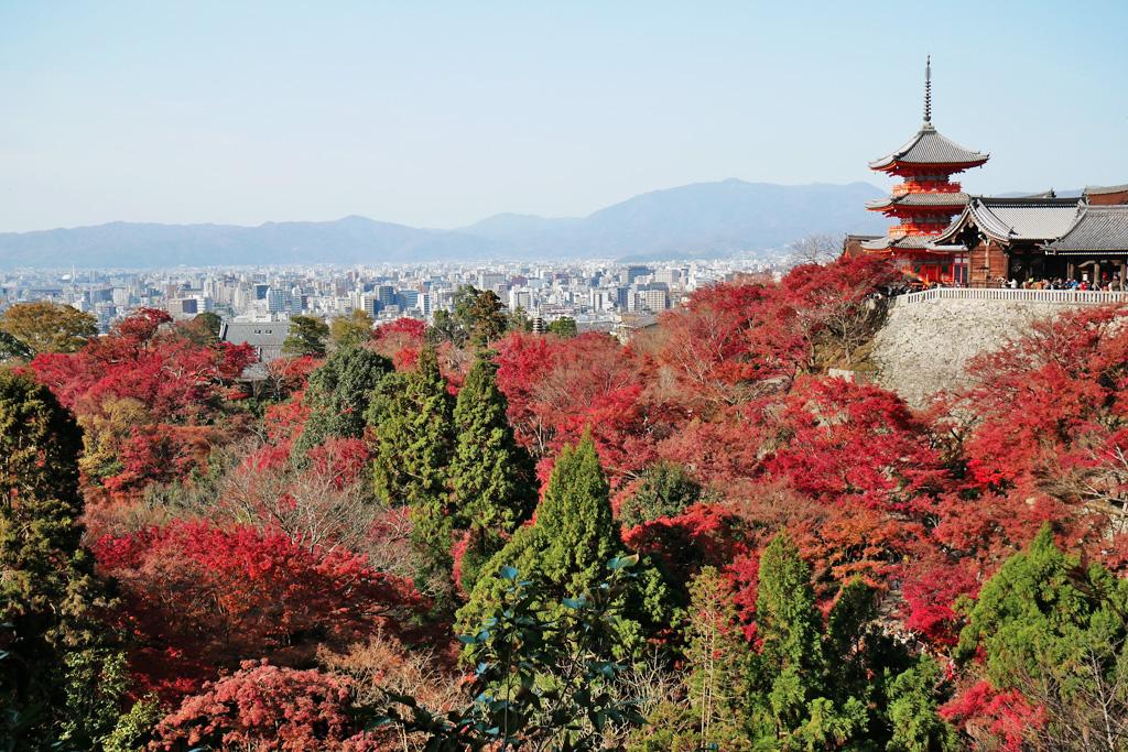 清水寺の紅葉の写真素材