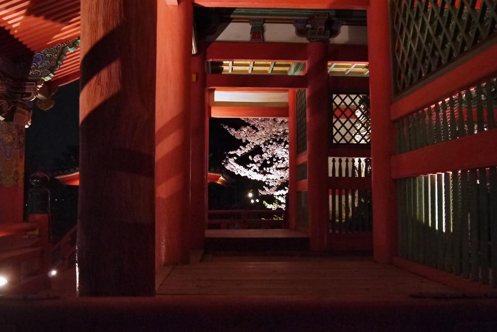 清水寺の桜の写真素材