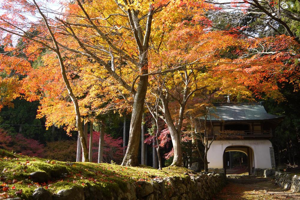 古知谷阿弥陀寺 紅葉の写真素材