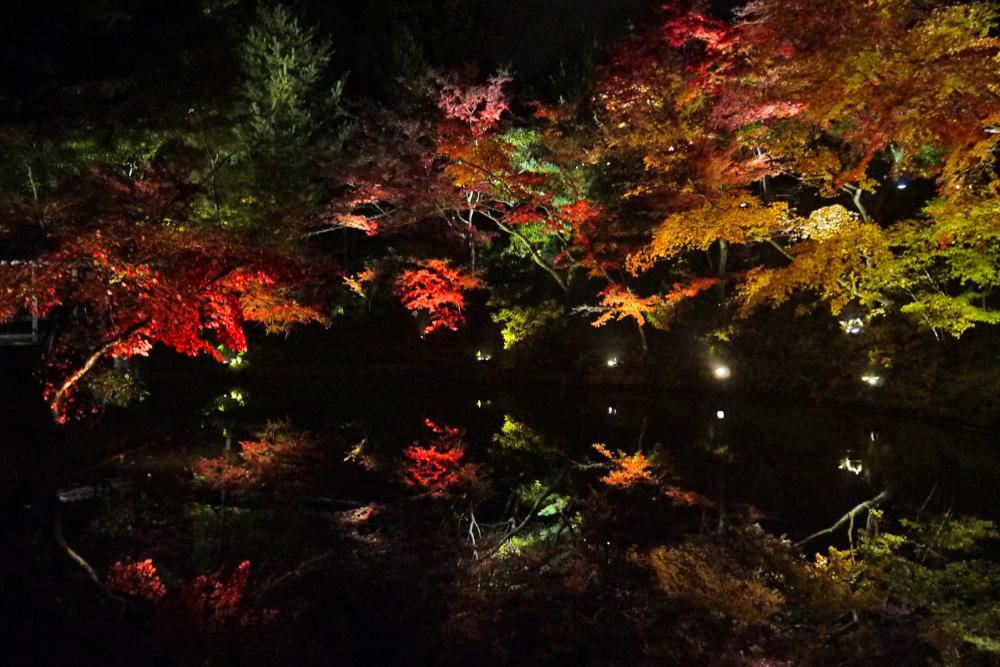 高台寺の紅葉ライトアップの写真素材