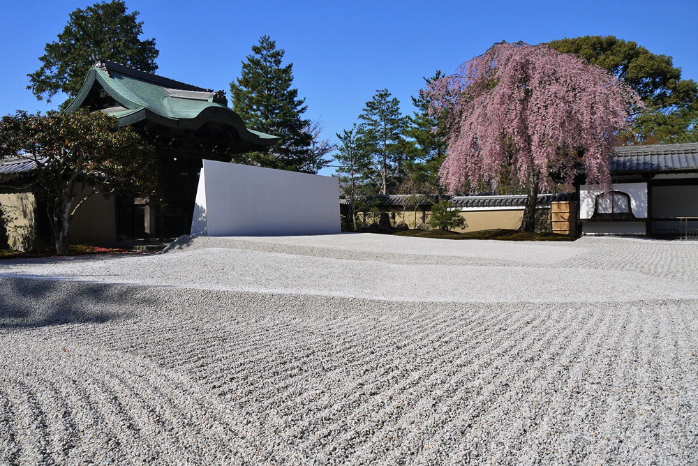 高台寺 桜の写真素材