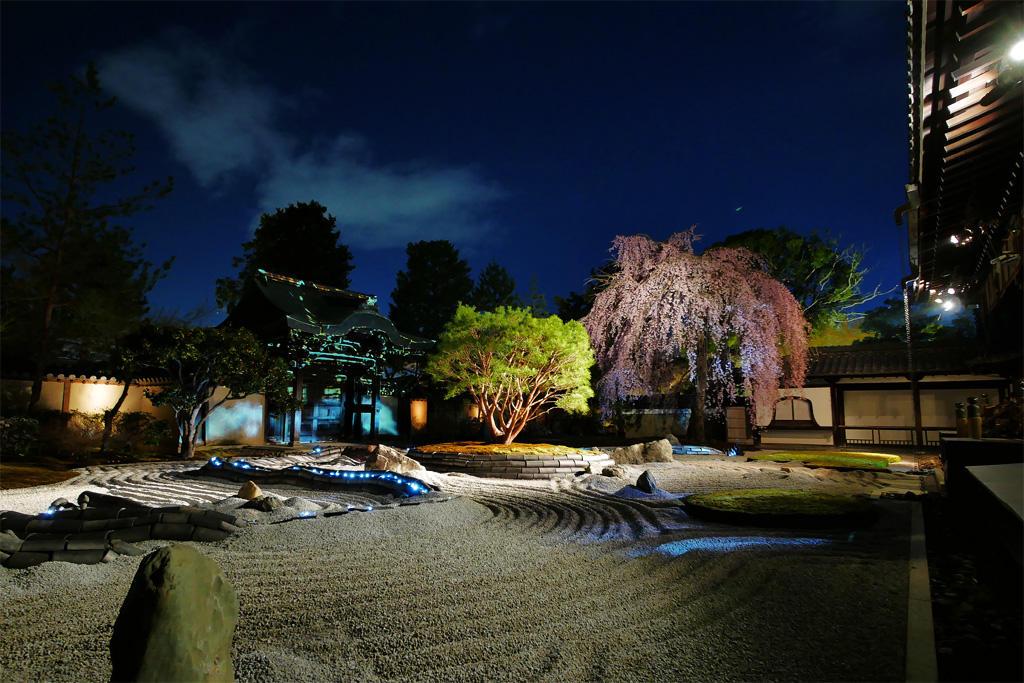 高台寺 桜ライトアップの写真素材