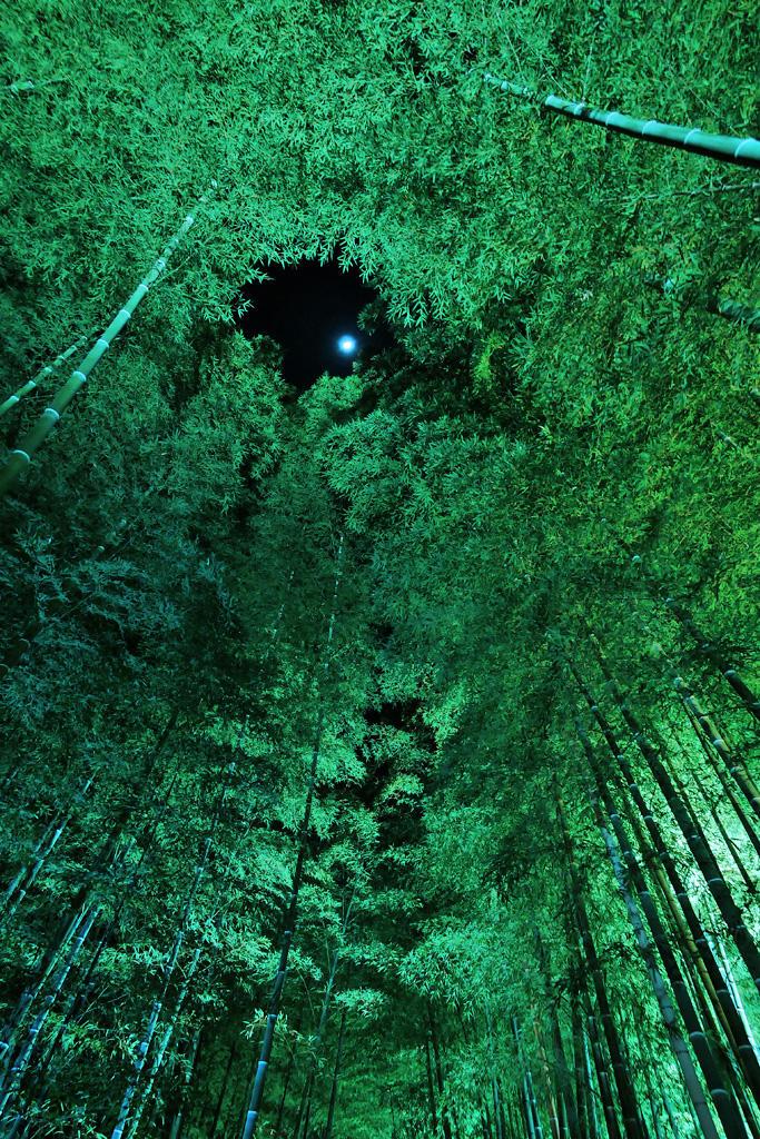 高台寺 竹林 ライトアップの写真素材
