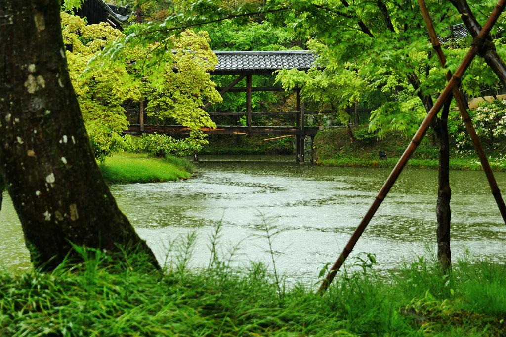高台寺 雨の臥龍池の写真素材