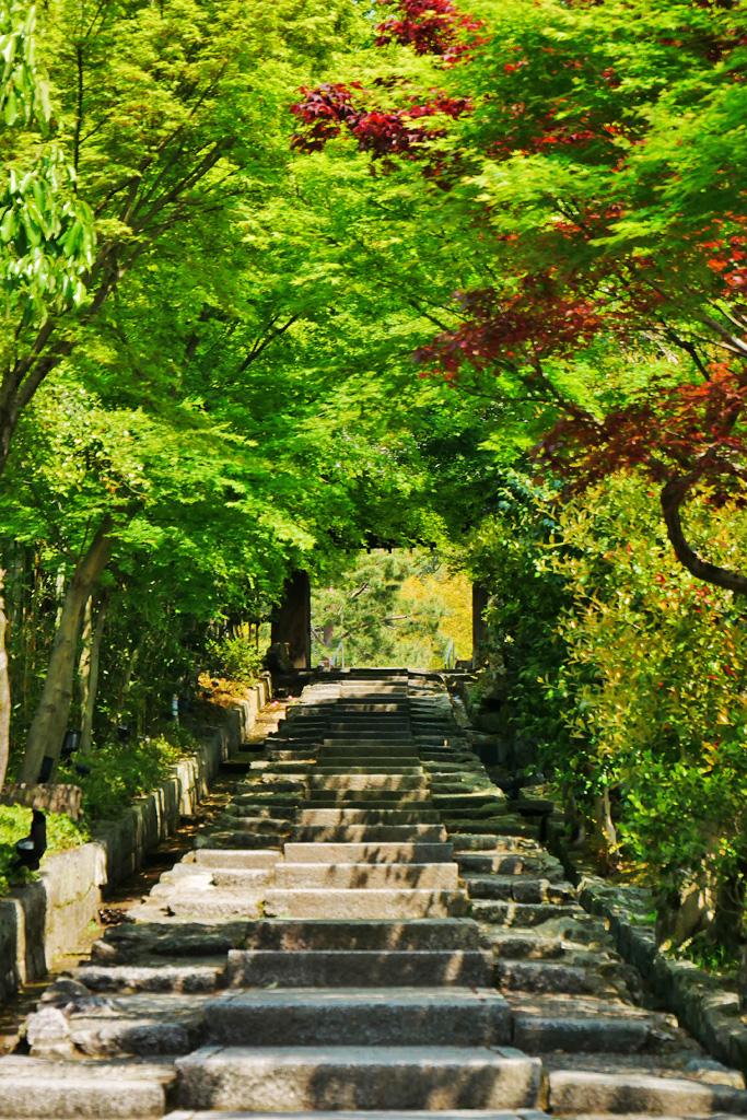 高台寺 台所坂の青もみじの写真素材