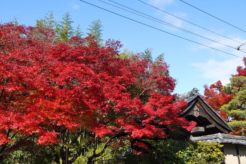 光悦寺の紅葉写真