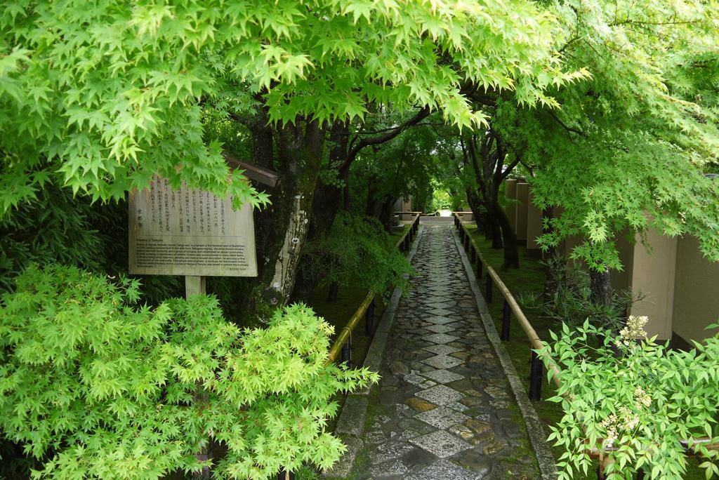 光悦寺の青もみじの写真素材