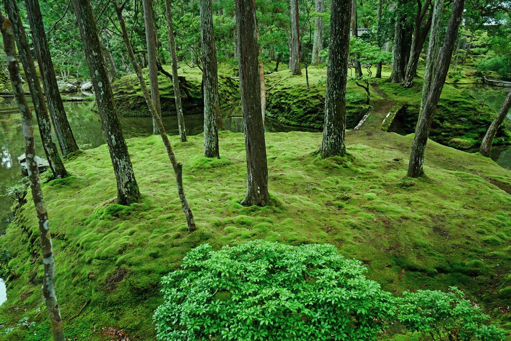 西芳寺(苔寺)の写真素材