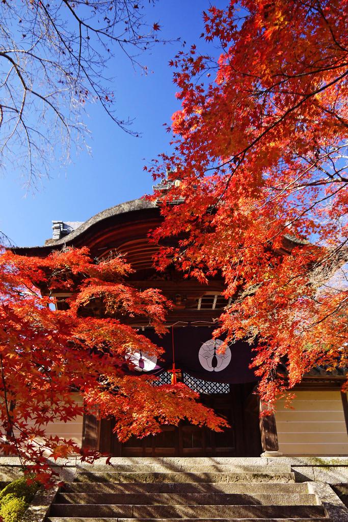 光明寺の紅葉の写真素材