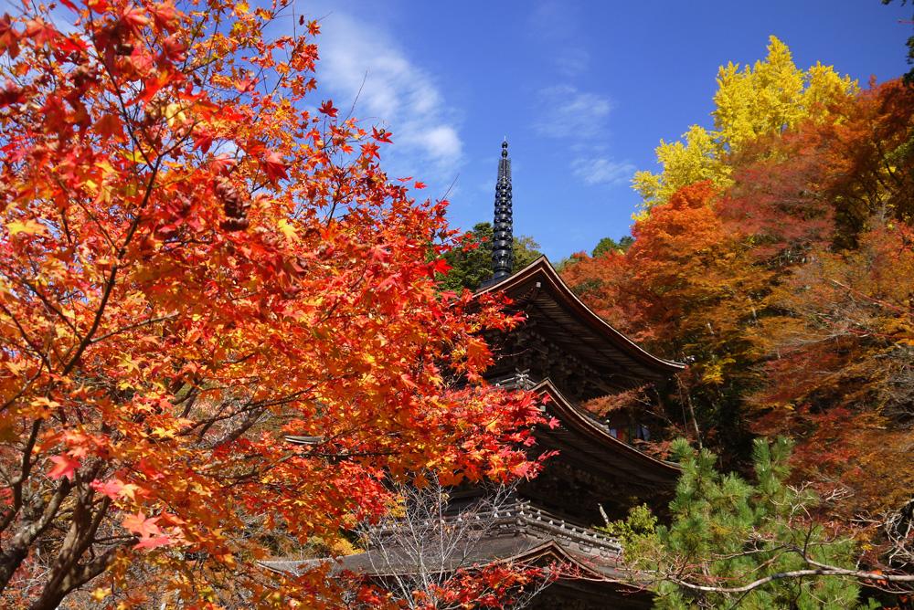 金剛院の紅葉の写真素材