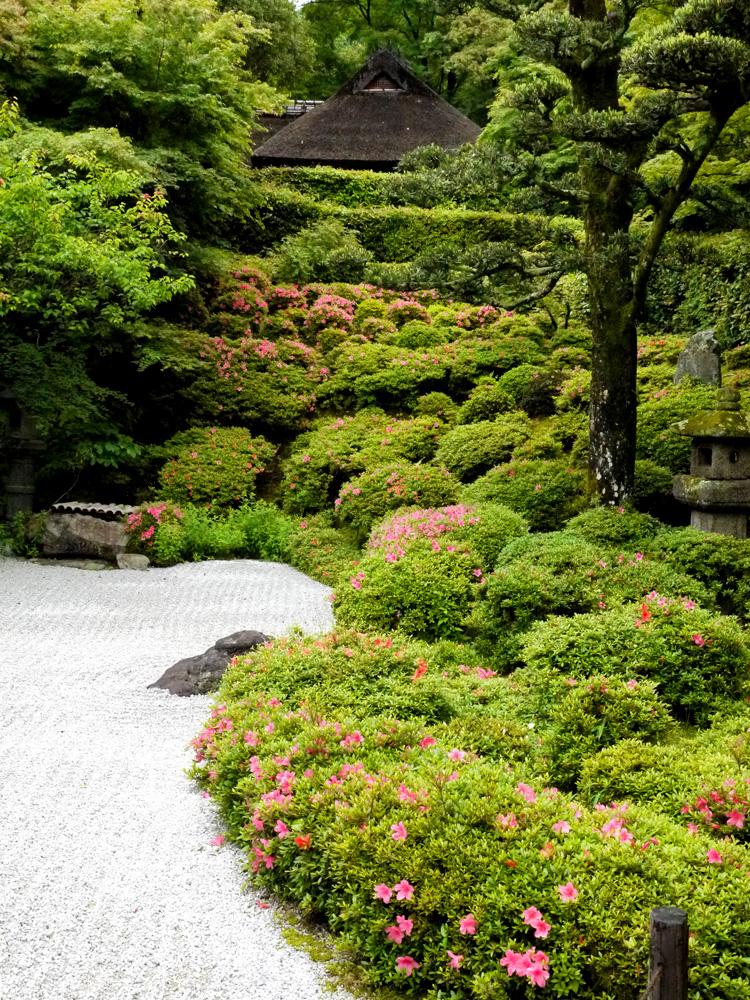 金福寺の皐月 枯山水庭園