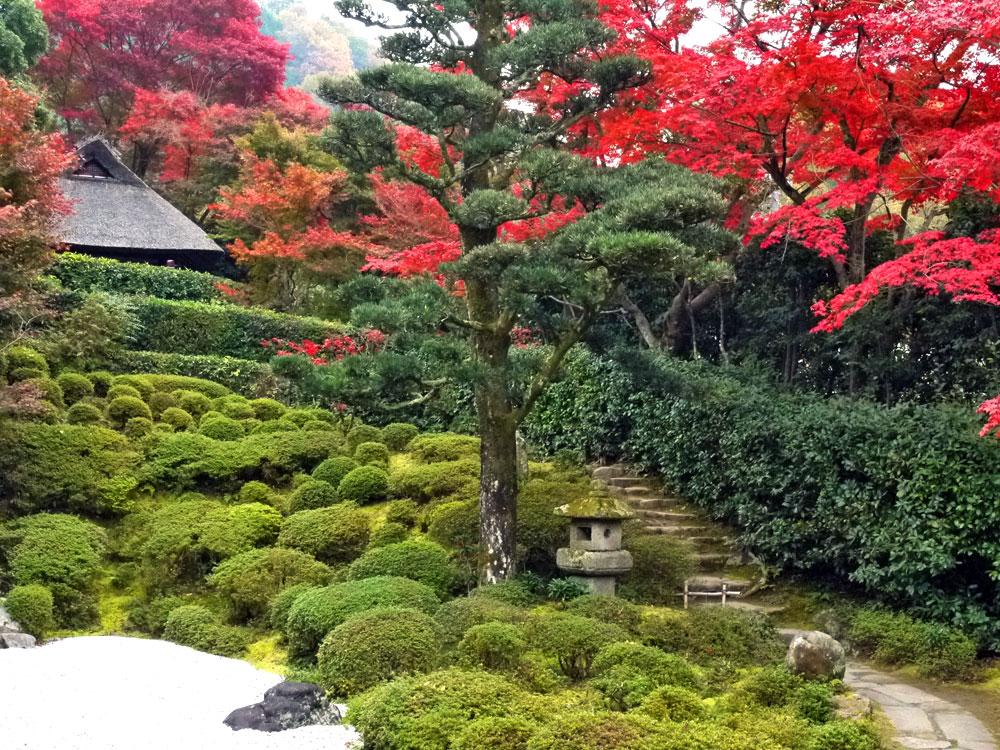 金福寺の紅葉