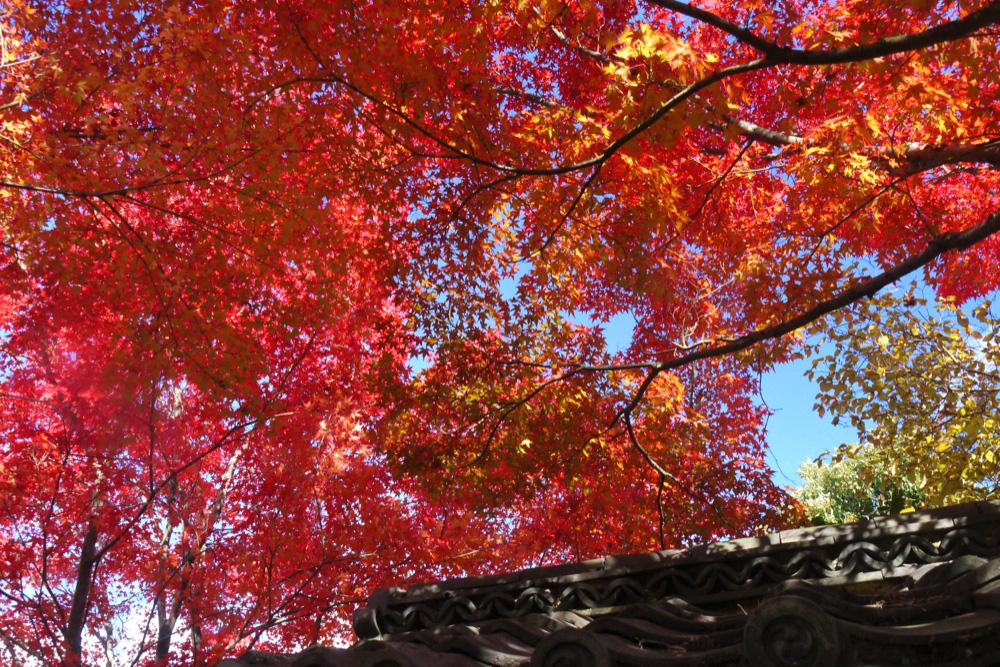 金福寺の紅葉の写真素材