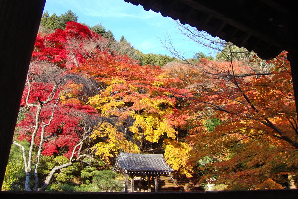 金蔵寺の紅葉写真素材