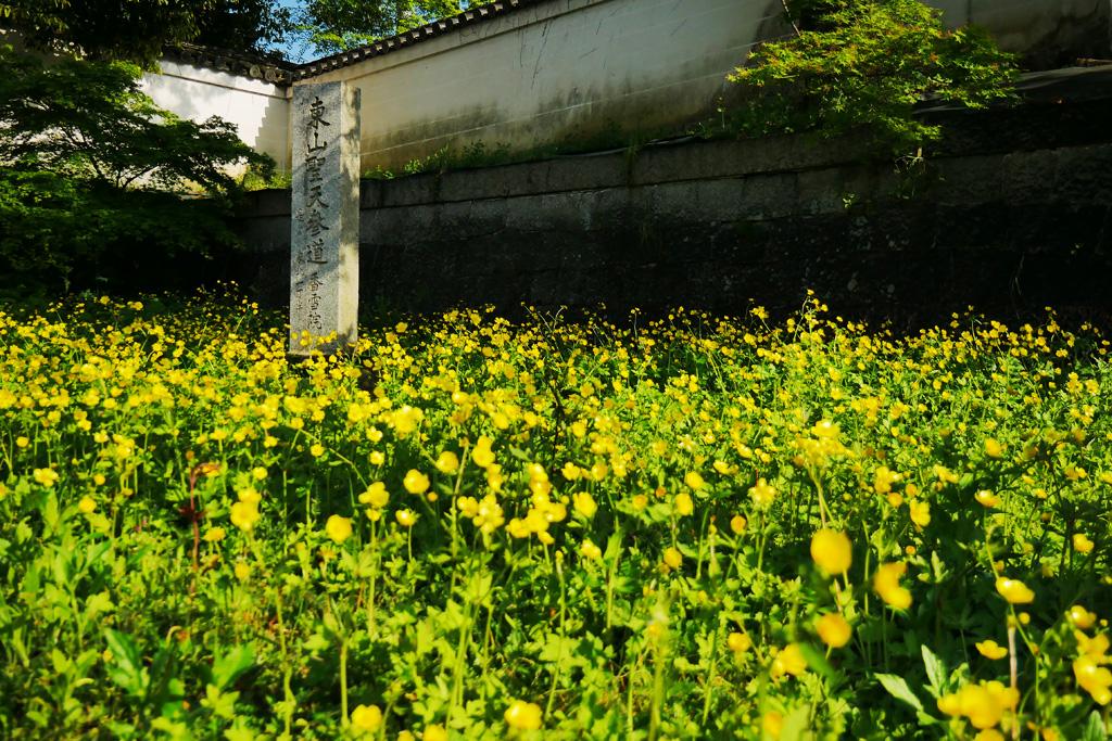香雪院の写真素材