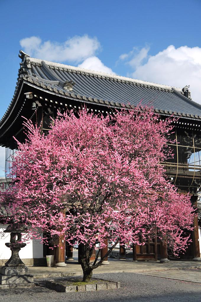 興正寺の写真素材