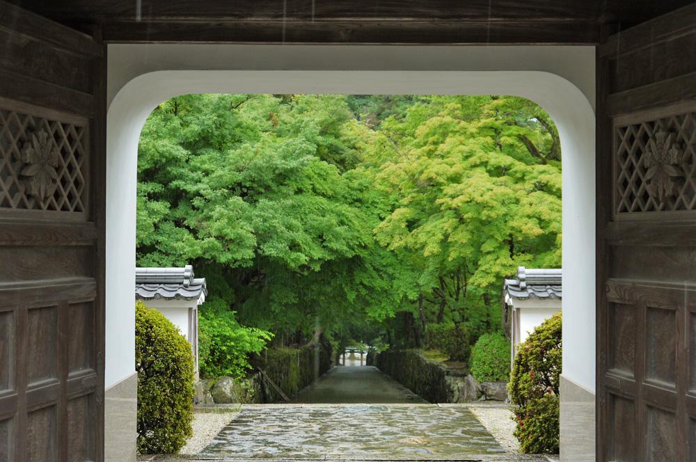 雨 興聖寺の青もみじの写真素材