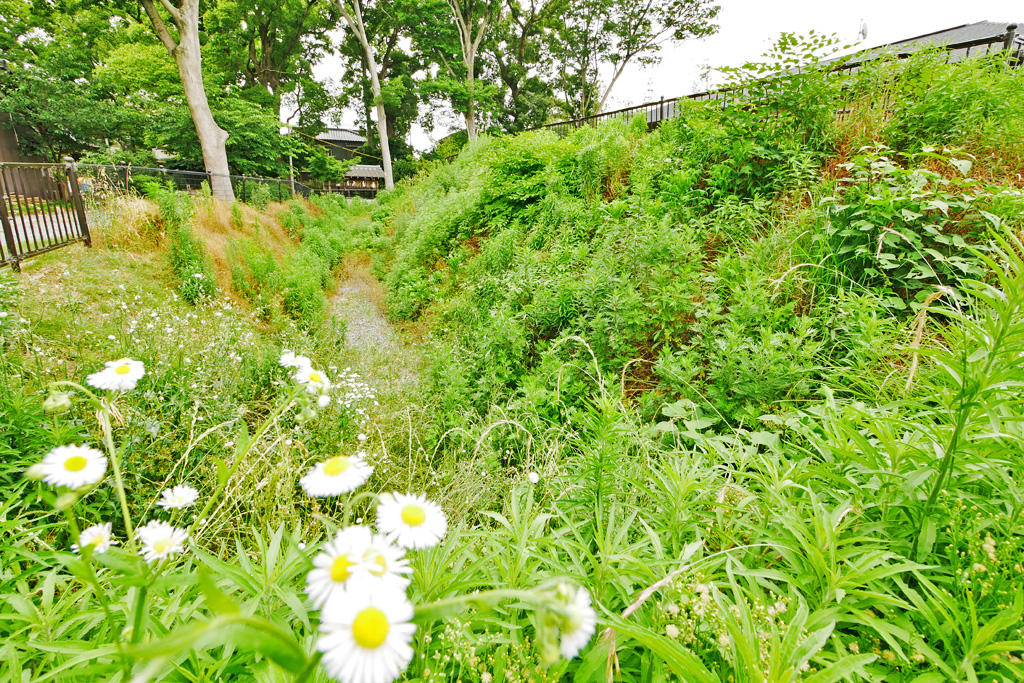 勝龍寺城の土塁の写真素材