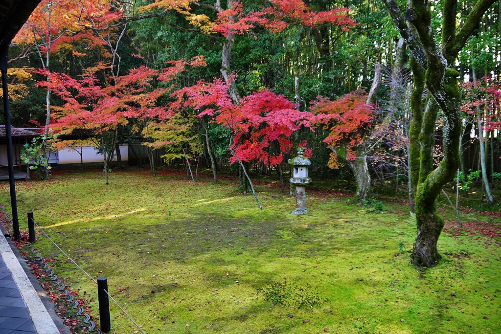 大徳寺高桐院の紅葉の写真素材